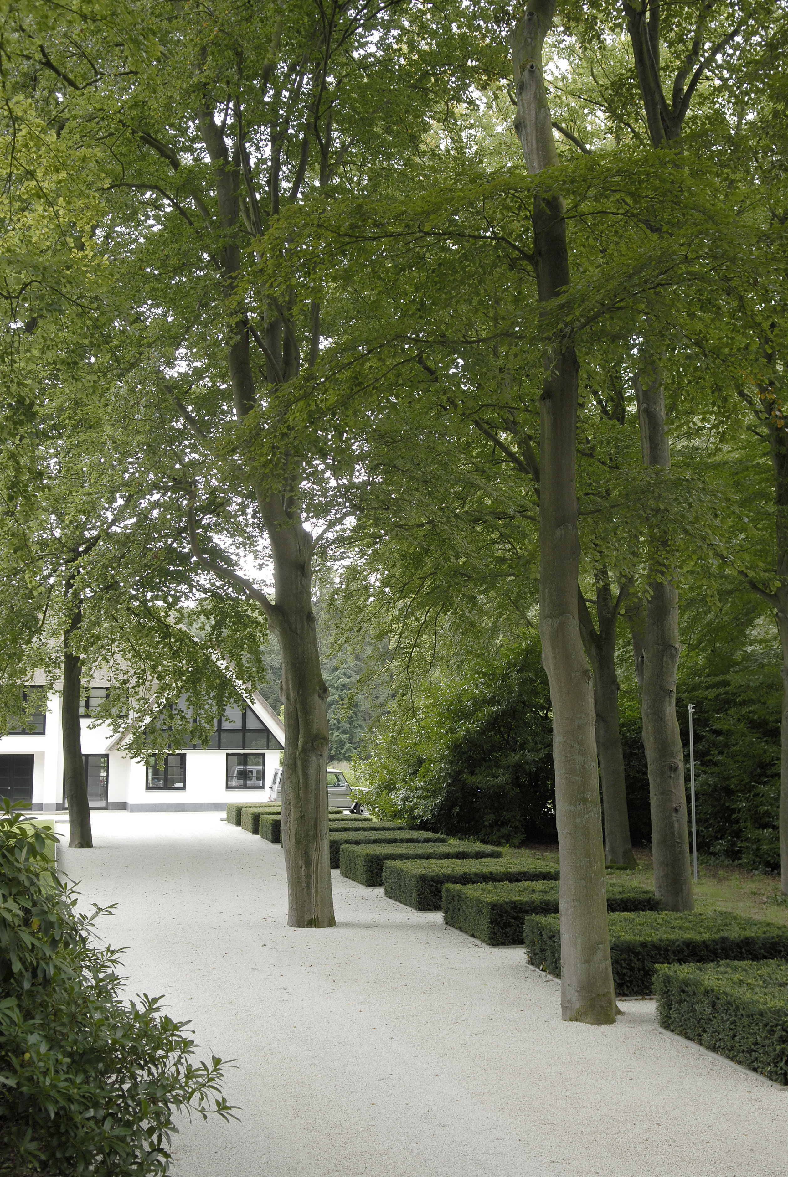 Modern garden architecture emphasising the robust character of the old forest  | Andrew van Egmond